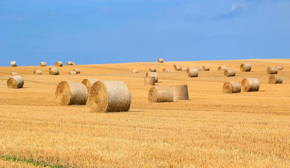 Hay Bales, Hay, Straw Bales, Straw, Harvest