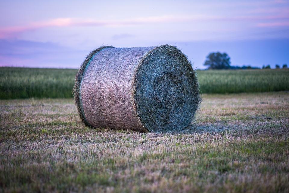 Hay, Hay Bales, Straw, Meadow, Arable, Field, Evening