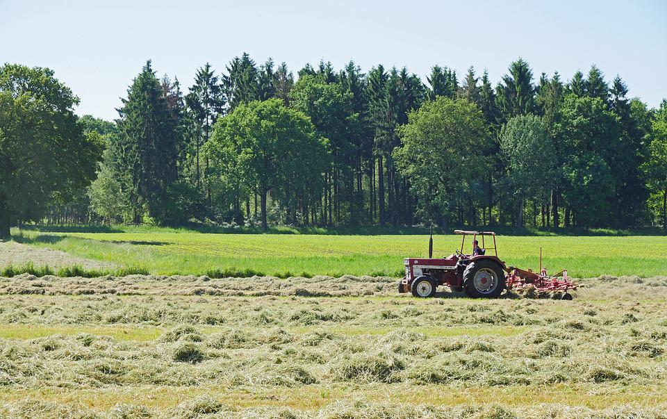 Hay, Grass, May, First Cut, Dry, Contact, Hay Tedders