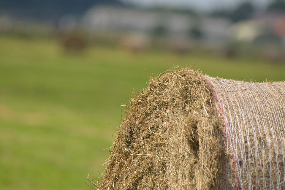 Hay, Round Bales, Hay Bales, Winter Feed, Harvest