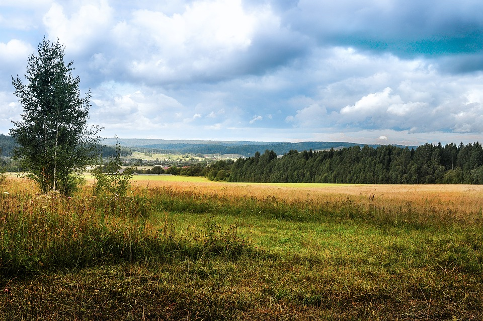 Panoramic, Landscape, Nature, Field, Grass, Haymaking