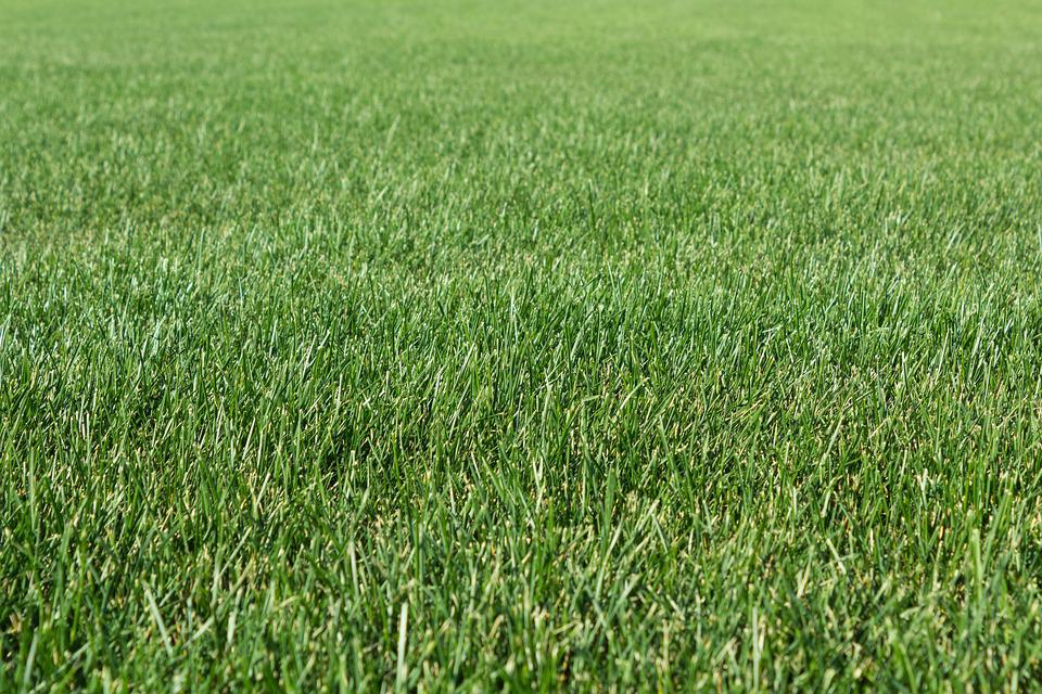 Grass, Field, Haymaking, Shoots, Summer, Lawn