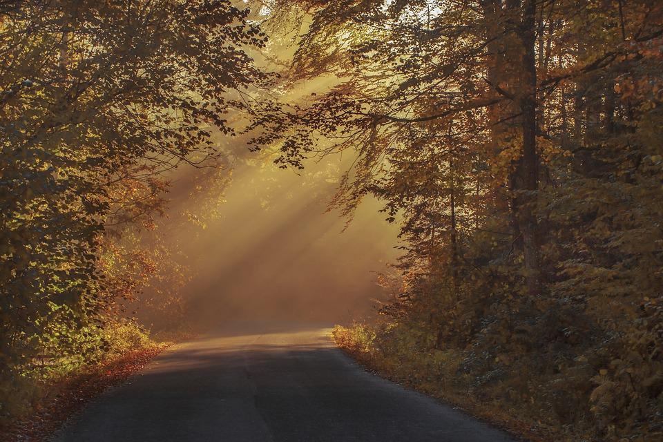 Autumnal, Beautiful, Color, Dawn, Haze, Morning, Forest