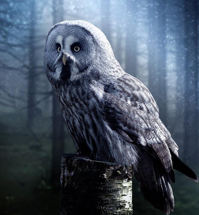 Owl, Bird, Beautiful, Night, Dark, Fog, Haze