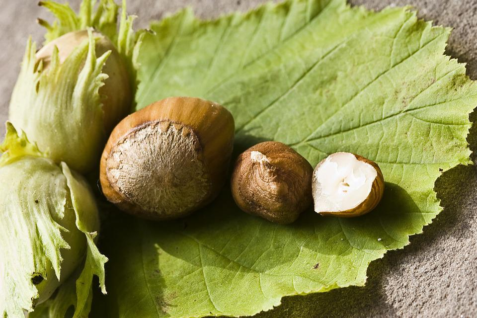 Nut, Hazelnut, Green, Eat, Food, Shell