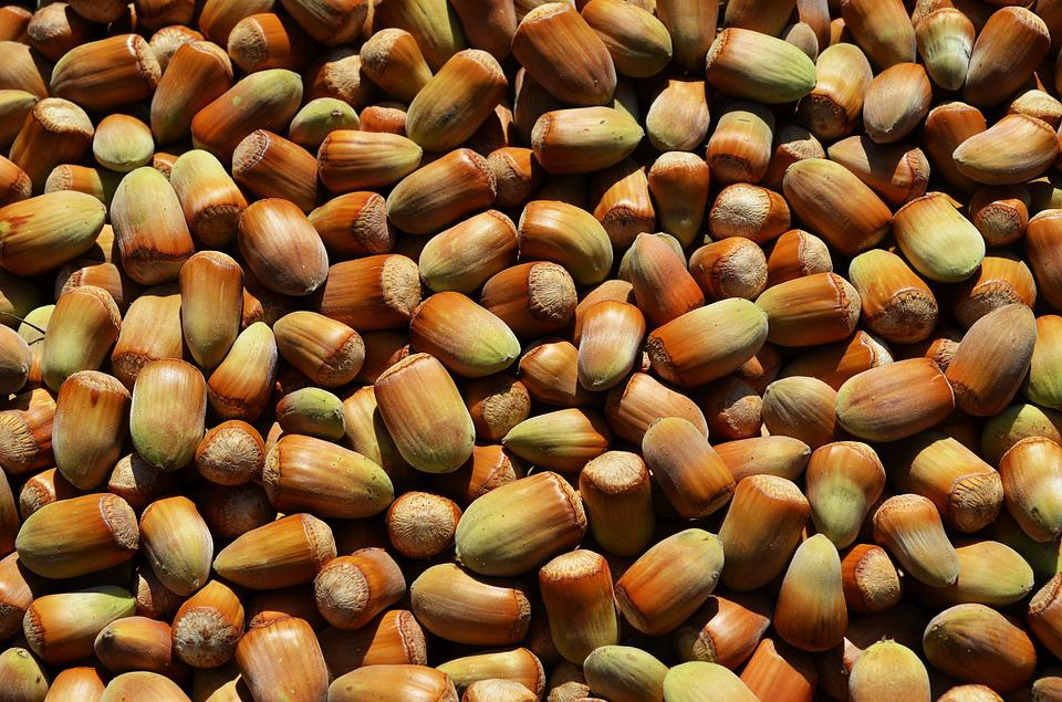 Hazelnuts, Fruit, A Collection Of, Mature, Food