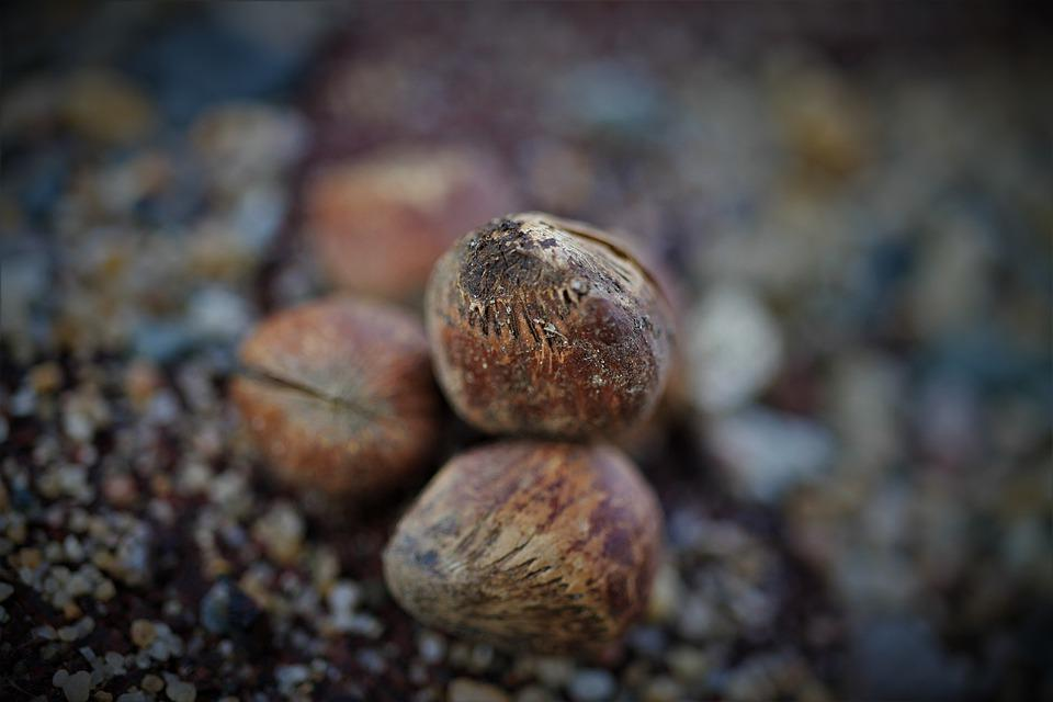 Hazelnuts, Nuts, Shell, Hazelnut, Food, Brown