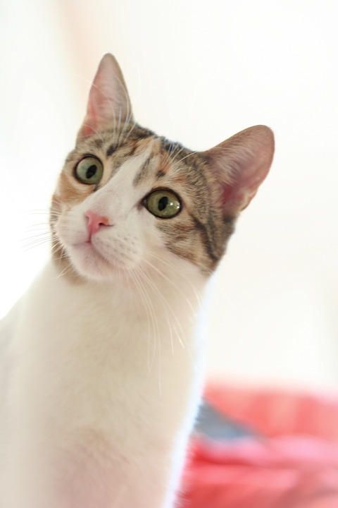 Cat, View, White, Domestic Cat, Animal, Cat Face, Head