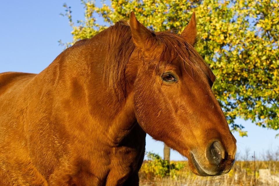 Horse, Animal, Head, Close Up, Nature, Ride, Horse Head