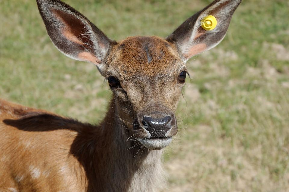 Suede, Animal, Zoo, Head