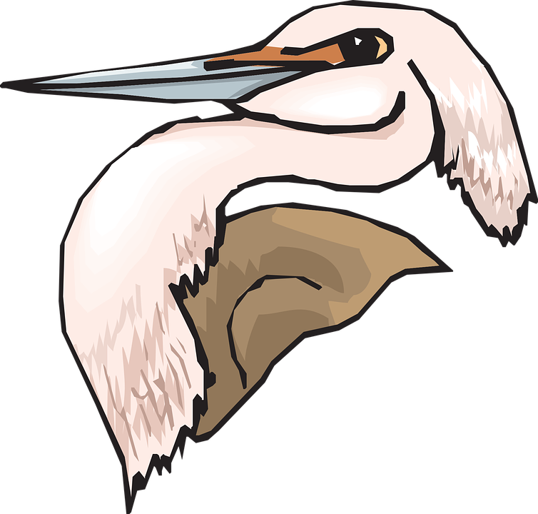 Heron, Head, Pink, Bird, Long, Neck, Feathers, Ardea