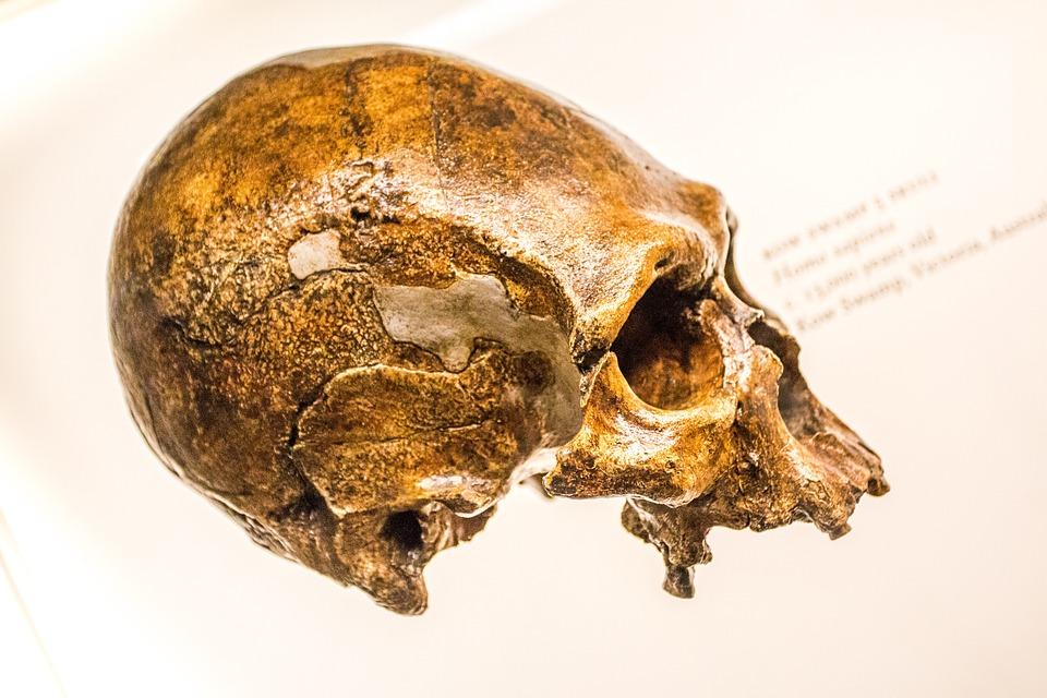 Free photo Head Death Halloween Weird Skull Dead Skeleton - Max Pixel