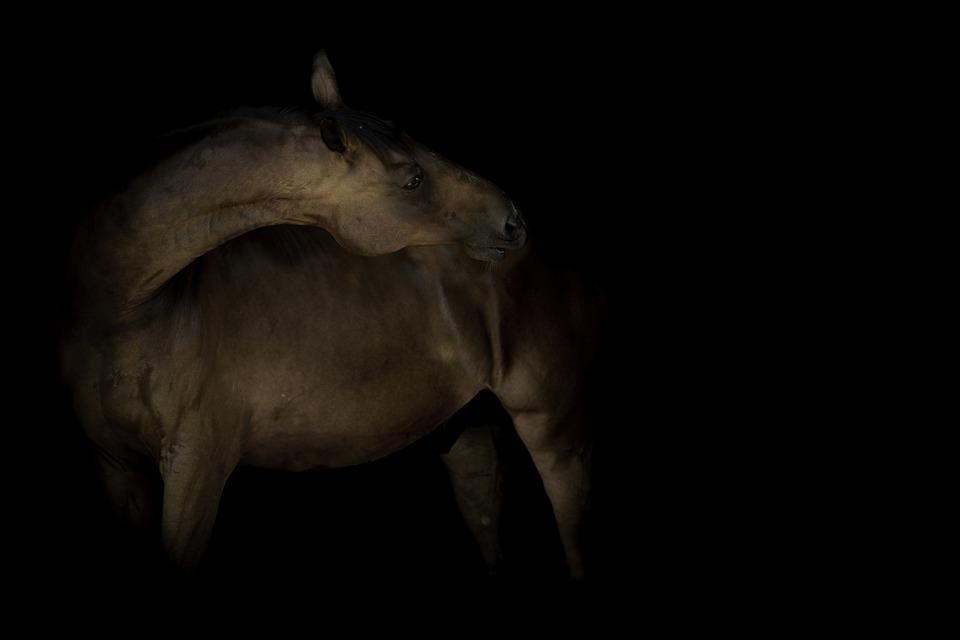 Horse, Horseback Riding, Animal, Equine, Head, Mane