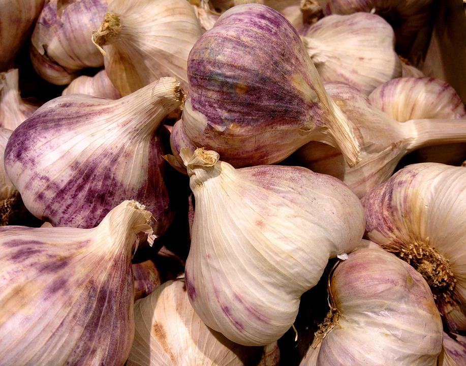 Garlic, Violet, Head Of Garlic, Plant Bulb