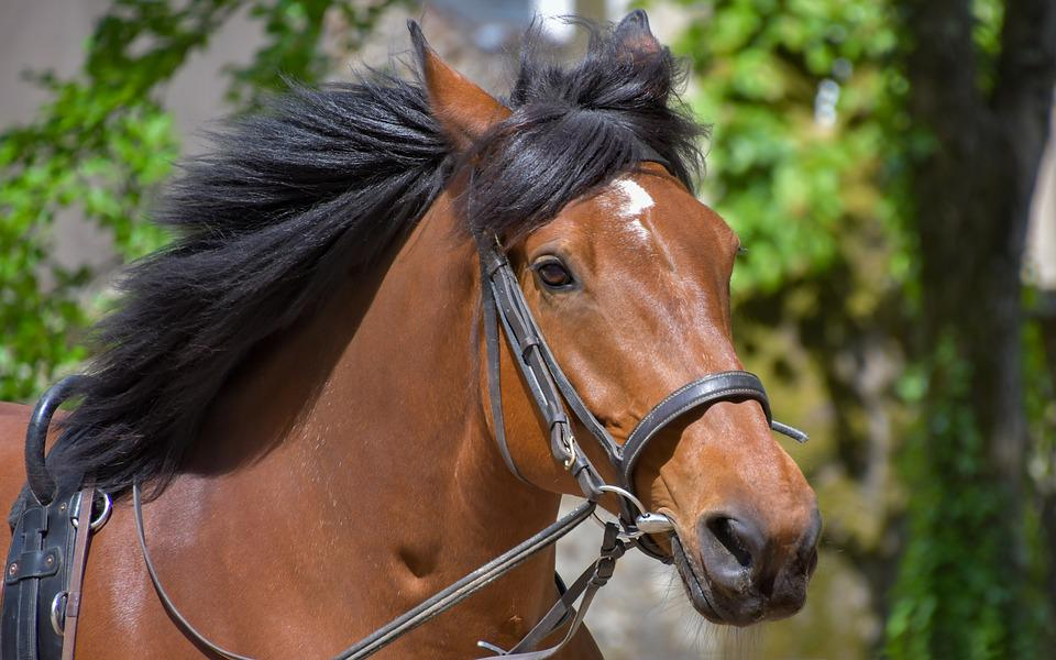 Horse, Head, Mane, Equine, Animal, Run