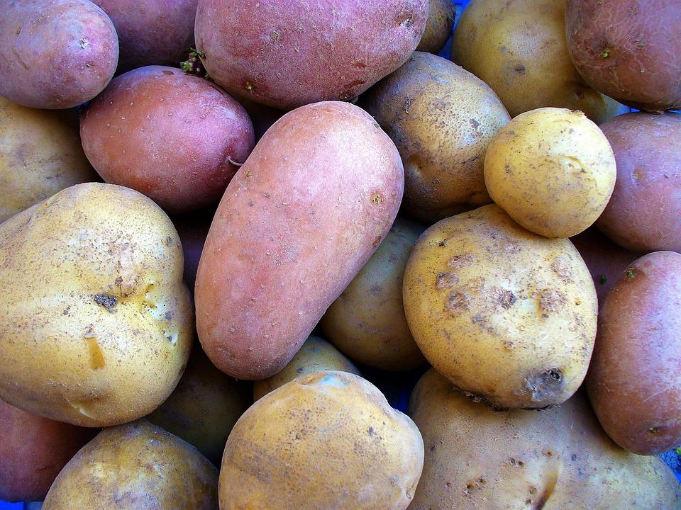 Food, Farm, No Person, Health, Agriculture, Potatoes