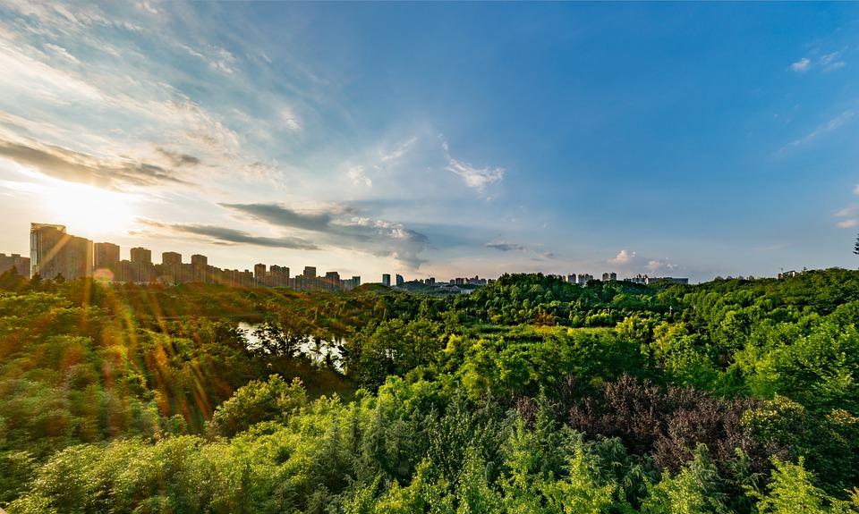Blue Sky, Park, Woods, Ecology, Sunshine, Health, City - Free Photo Health Woods Park City Blue Sky Ecology Sunshine - Max Pixel