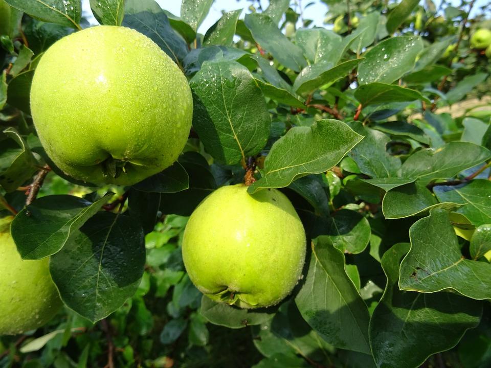 Fruit, Food, Leaf, Apple, Nature, Fresh, Healthy