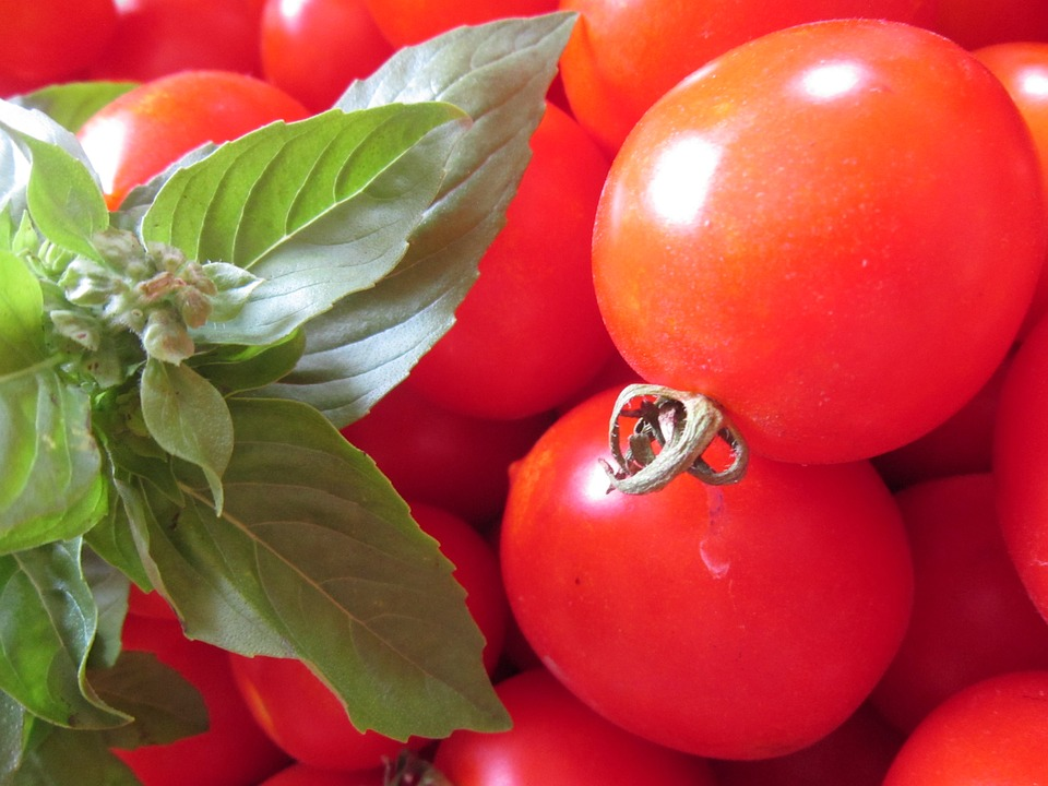 Tomato, Basil, Red, Green, Healthy, Frisch, Food