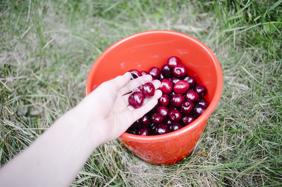 Cherries, Bucket, Fruits, Healthy, Food