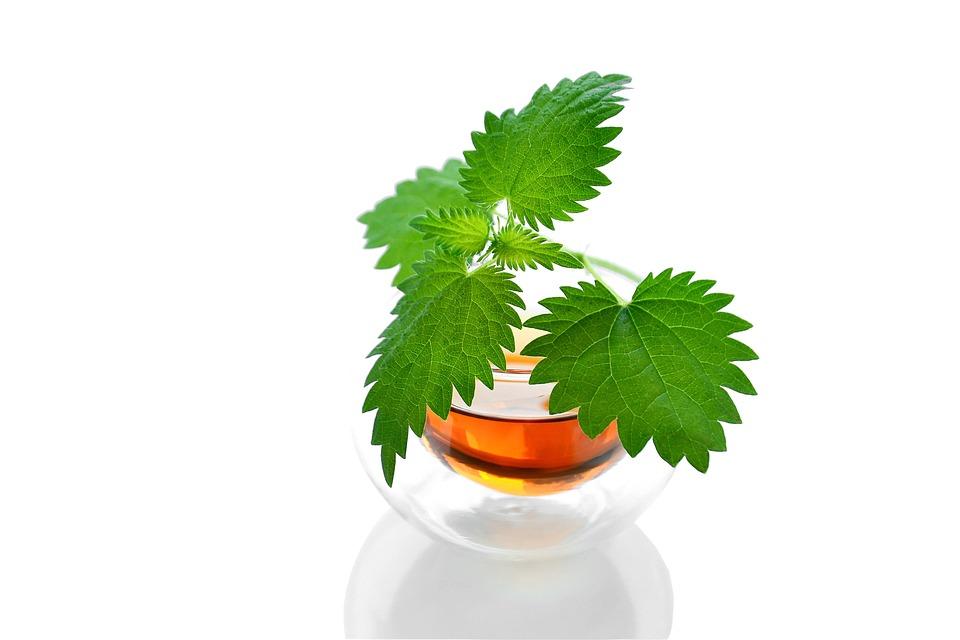 Tea, Herbal, Drink, Healthy, Hot, Delicious, Useful