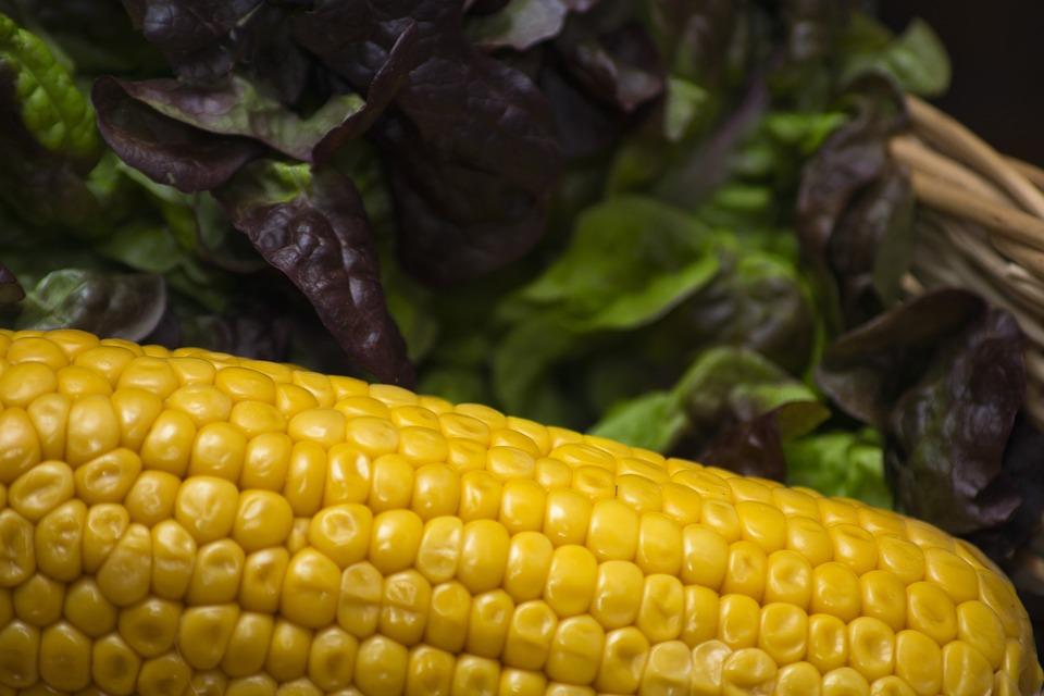 Corn, Lettuce, Healthy, Fresh, Vegetables, Organic