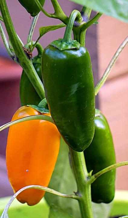 Paprika, Yellow, Green, Vegetables, Healthy, Food