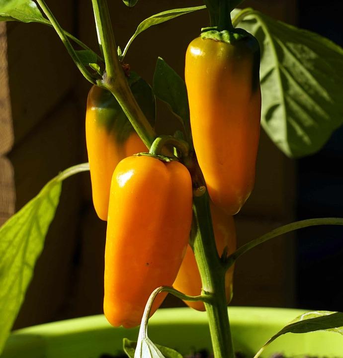 Paprika, Vegetables, Healthy, Vitamins
