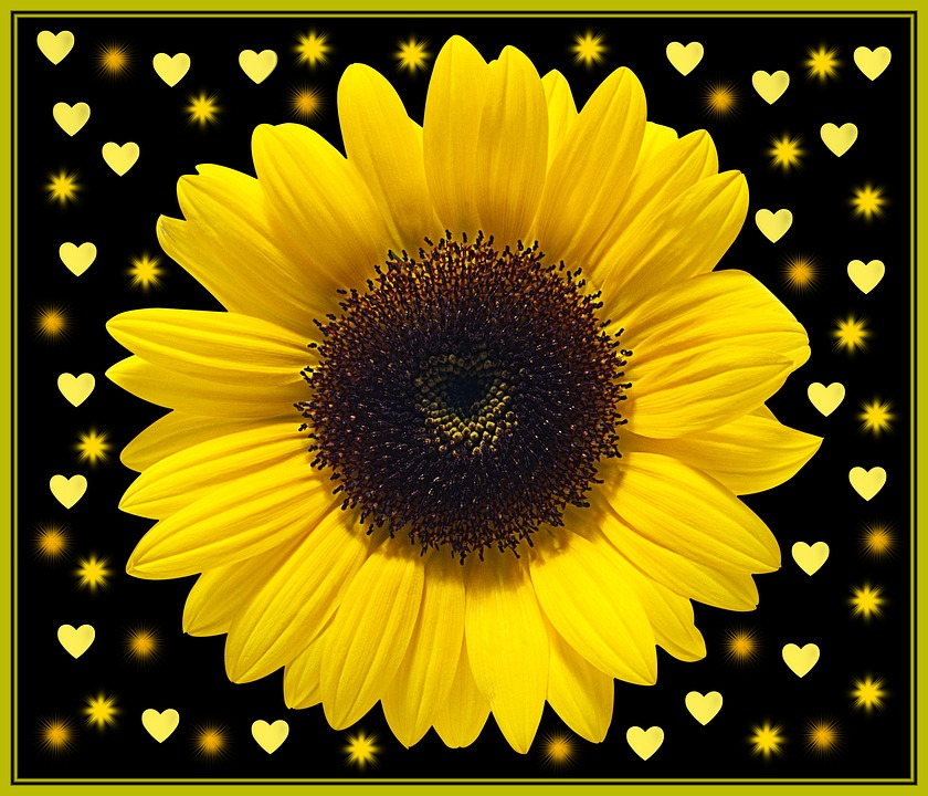 Flowers, Hearts, Heart, Black Background, Sunflower
