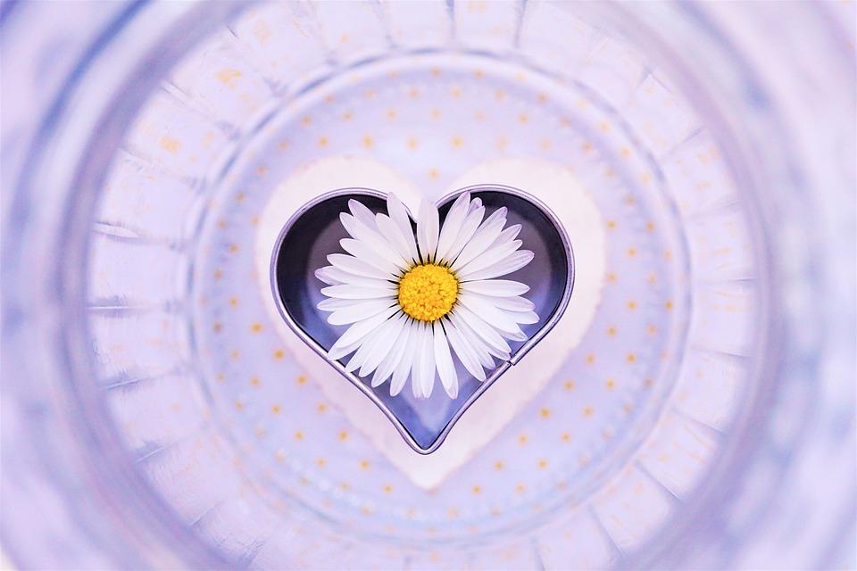 Daisy, Flower, Heart, Love, Blossom, Bloom