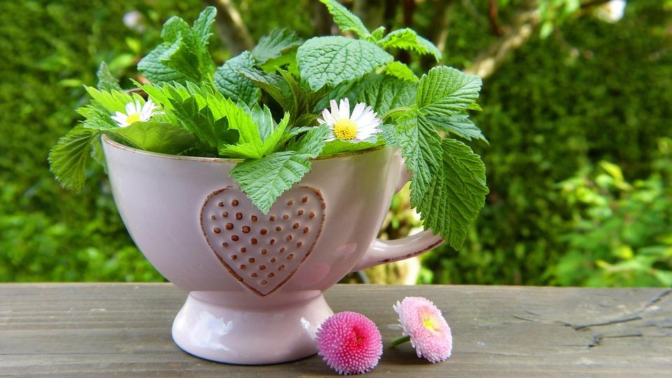 Herbs, Leaves, Flowers, Teacup, Heart, Daisy, Healthy