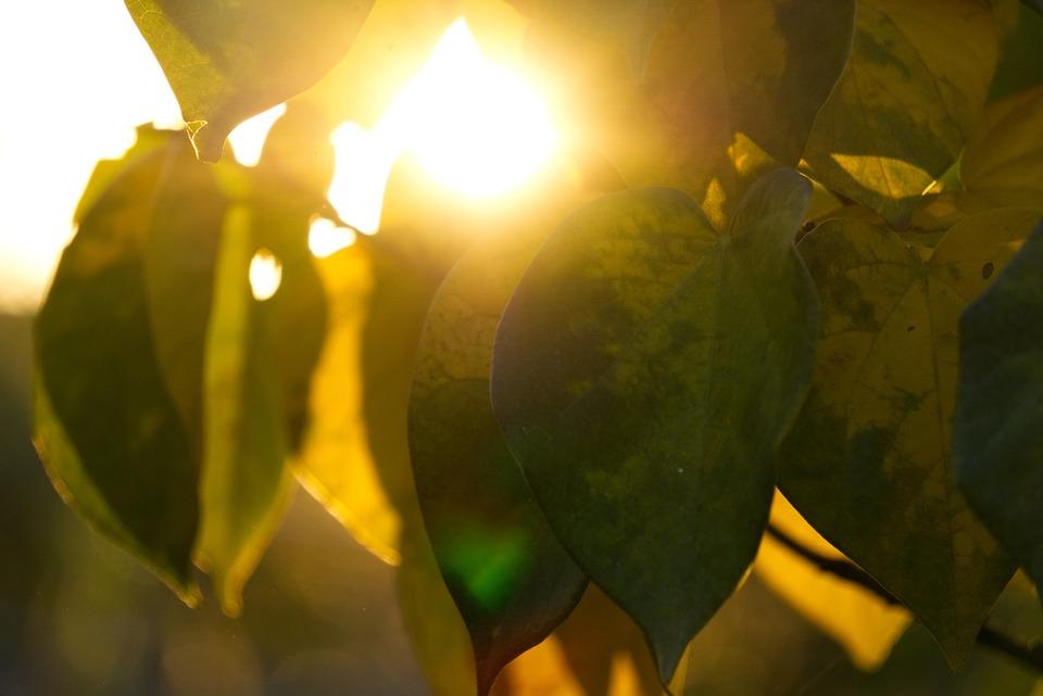 Backlighting, Sun, Sunset, Mood, Leaf, Heart