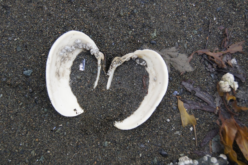 Shell, Heart, Sand, Sea, Love, Nature, Beach, Summer