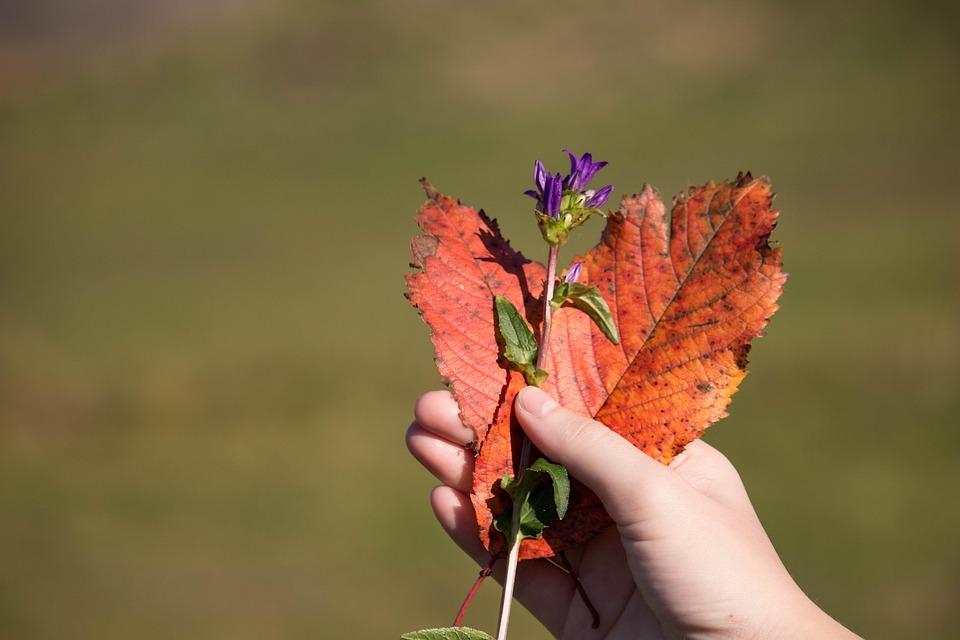 Heart Shape, Autumn Leaves, Purple Flower, Heart