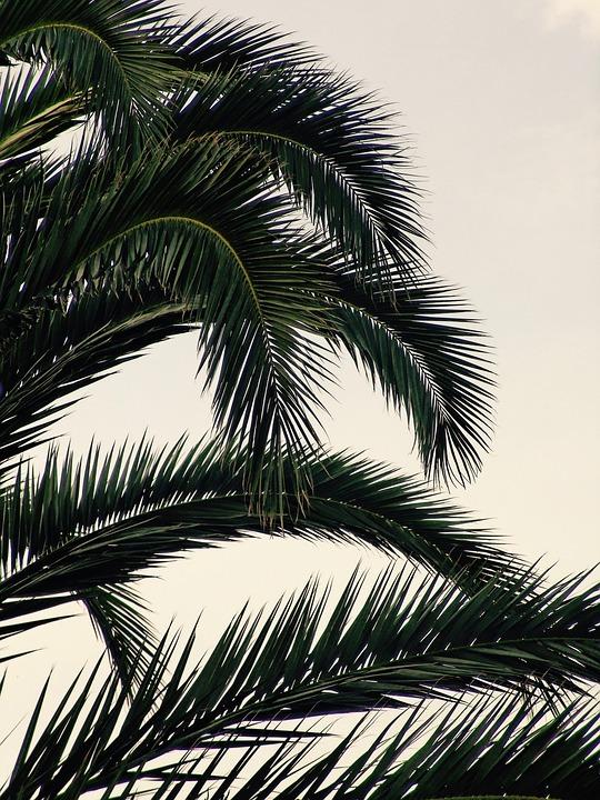 Sky, Tree, Blue, Summer, Heat, Nature
