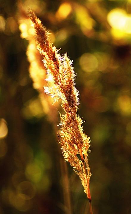 Yellow, Summer, Heat, Live Photos, Beauty, Macro, Grass