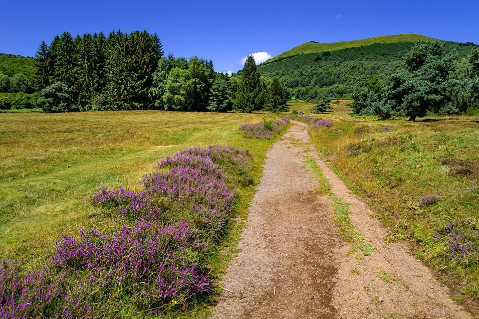 Landscape, Countryside, Path, Heather, Hill, Nature