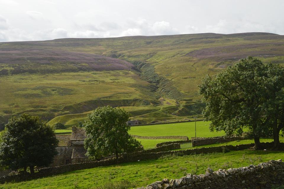 Dry-stone Wall, Heather, Purple, Gulley, Seam