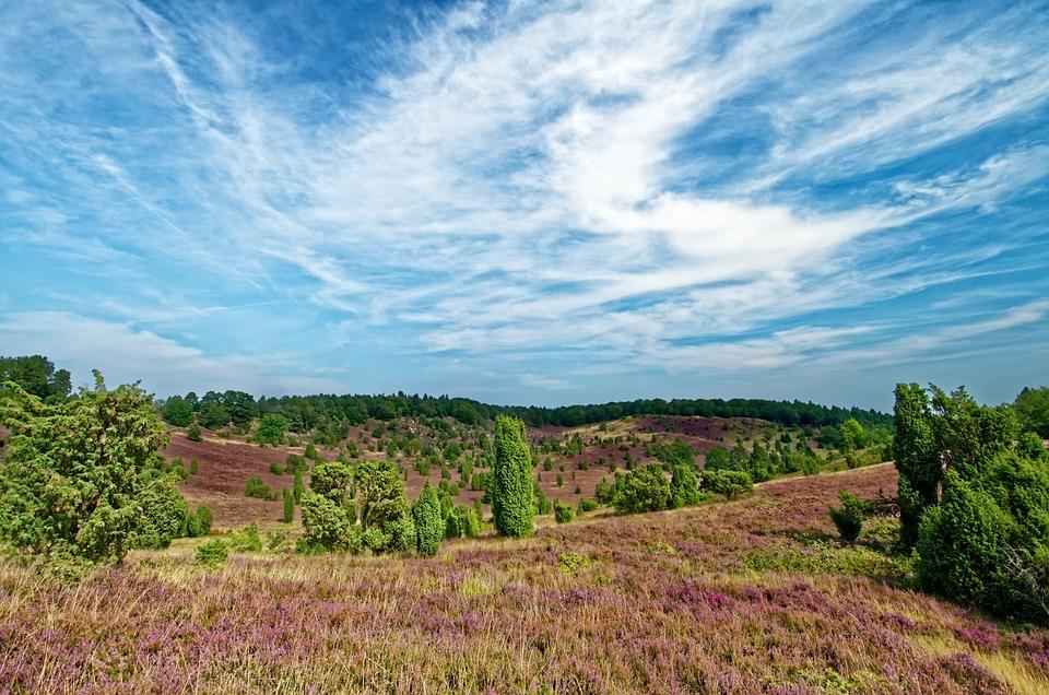 Germany, Lüneburg Heath, Heathland, Heather