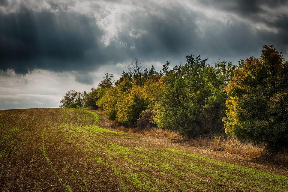 Hdr, Trees, Heaven, Field
