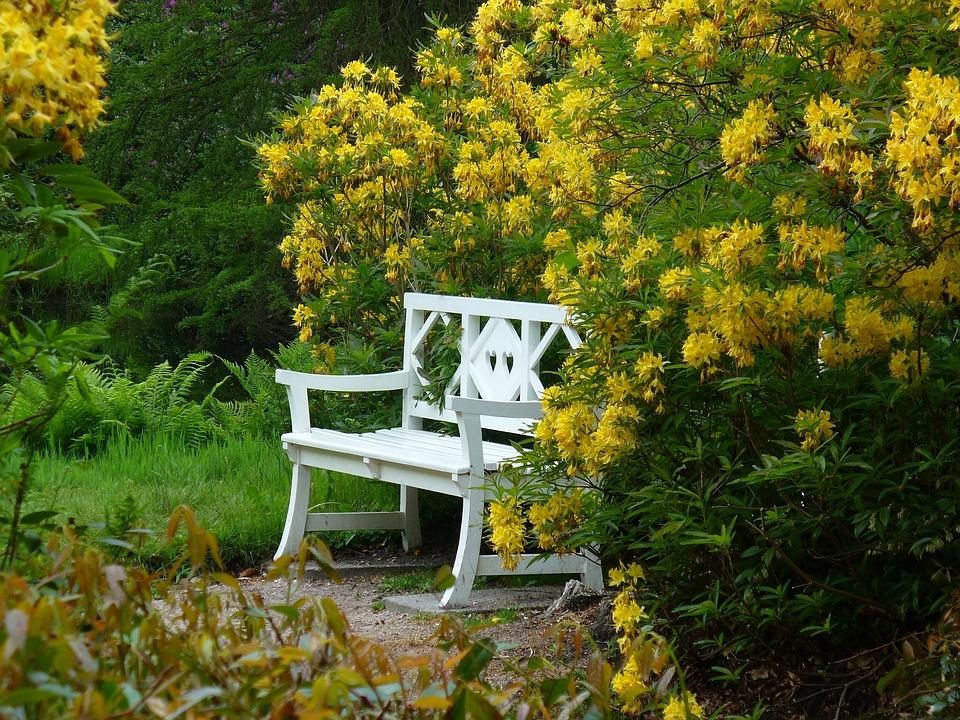 Bush, Autumn, Nature, Leaves, Hedge, Plant, Bank, Rest