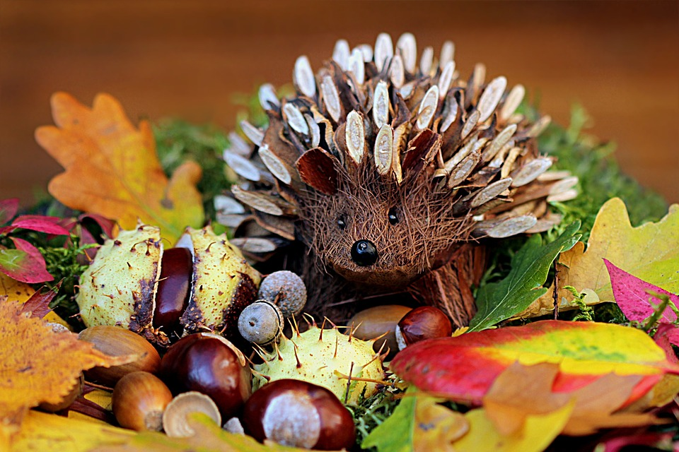 Still Life, Hedgehog, Decoration, Herbstdeko, Colorful