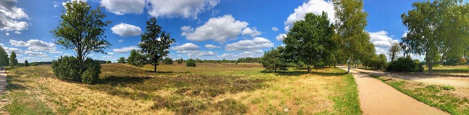 Lüneburg Heath, Nature, Heide, Heathland, Heather