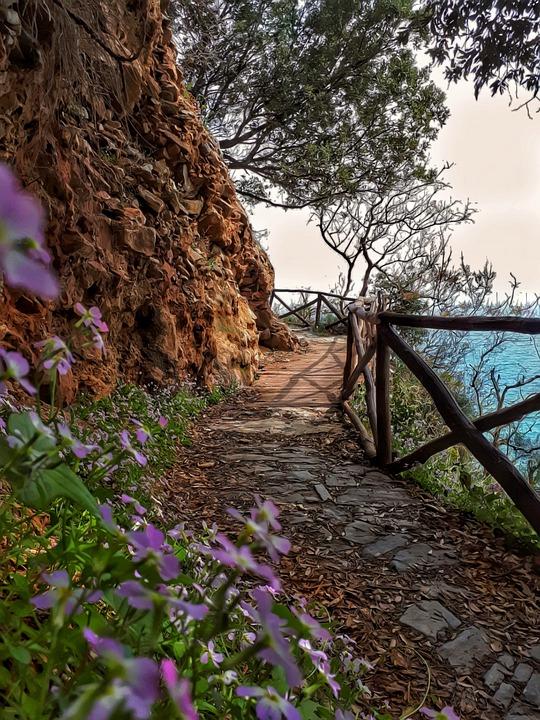 Trees, Path, Sea, Flowers, Hellas, Pelion, Nature