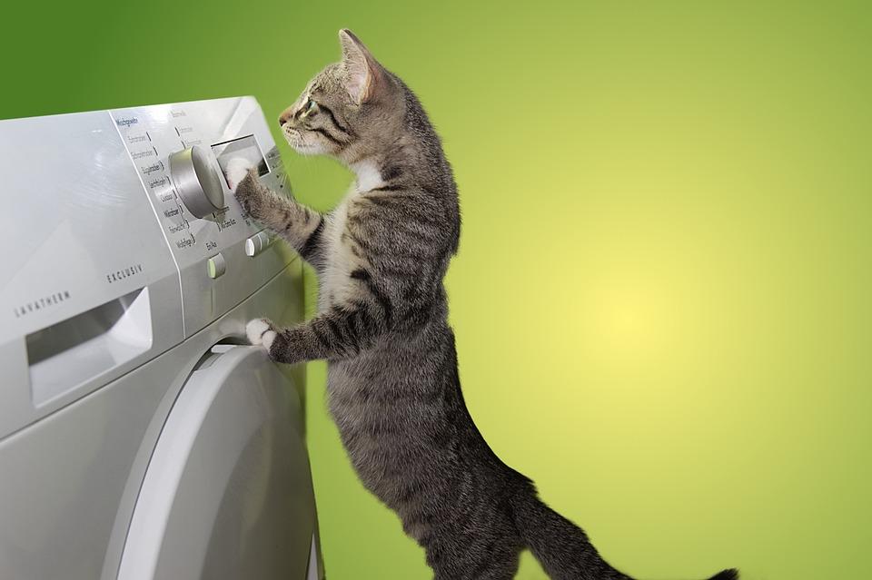 Cat, Domestic Cat, Dryer, Helper, Help, Budget, Pet