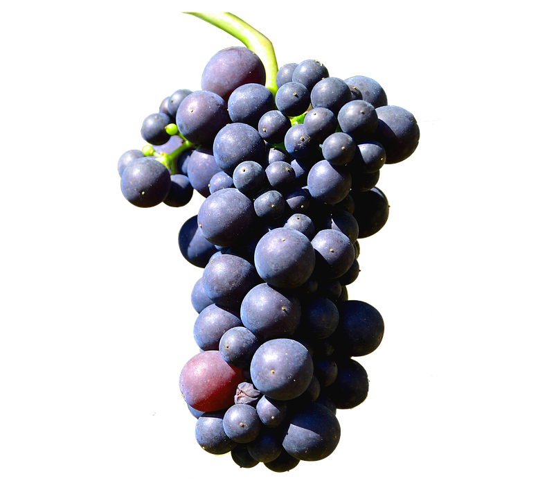 Isolated, Grapes, Henkel, Grape, Leaves, Close Up