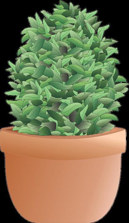 Shrub, Bush, Plant, Tree, Herb, Pot, Terra Cotta