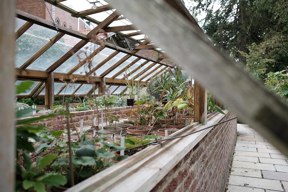 Greenhouse, Garden, Plants, Potted Plants, Herb Garden