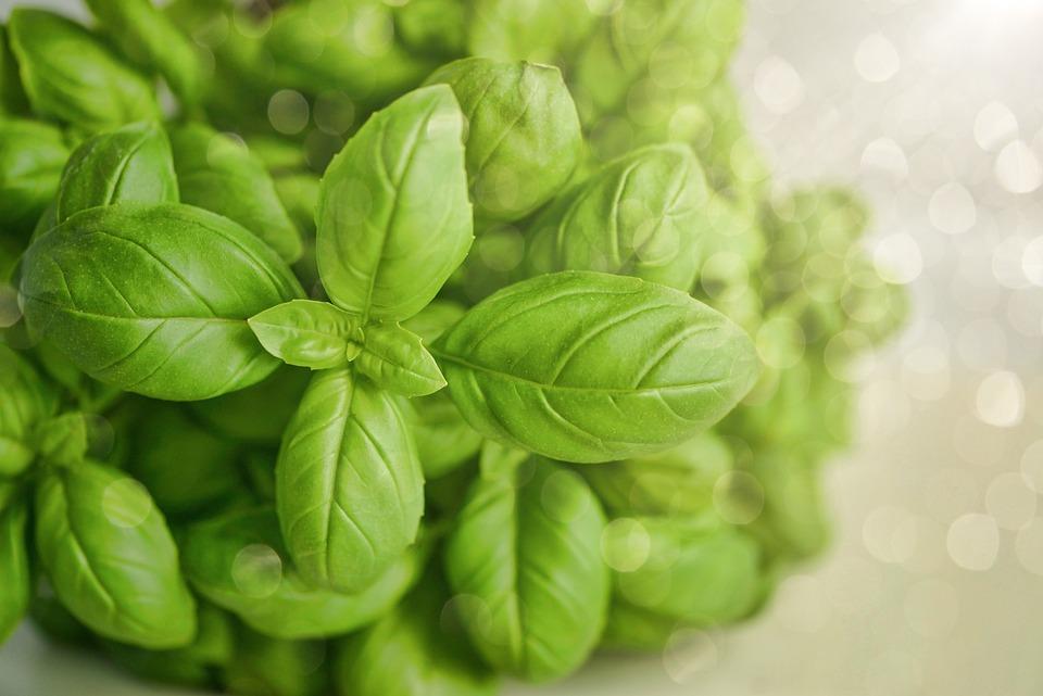 Basil, Green, Herb, Food, Fresh, Green Food