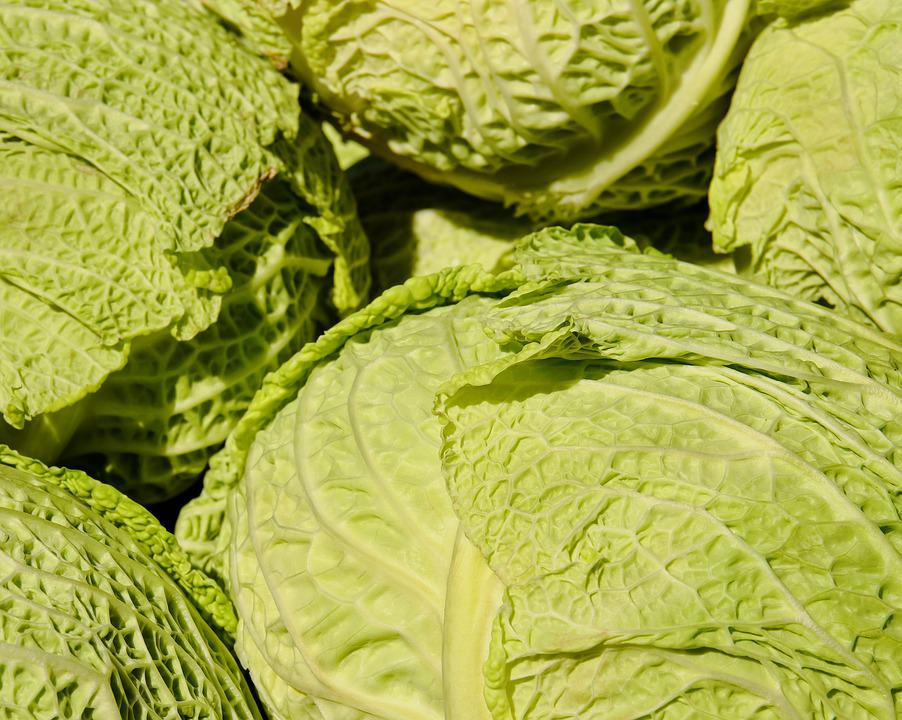 Savoy, Savoy Cabbage, Kohl, Vegetables, Herb